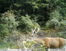 Deer Hunting Trail Cam