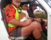 Canine Passenger