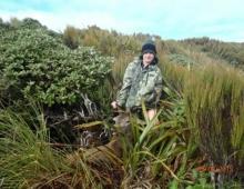 Deer Hunting Wairarapa