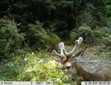 Deer Hunting Trail Cam
