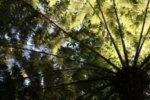 Explore the Flora