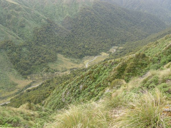 View down upper Waiohine Flats from Carkeek Ridge